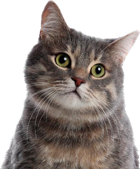 Produtos para Gatos