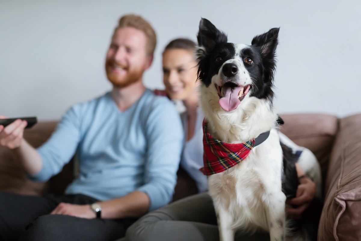 casal e cachorro assistindo tv