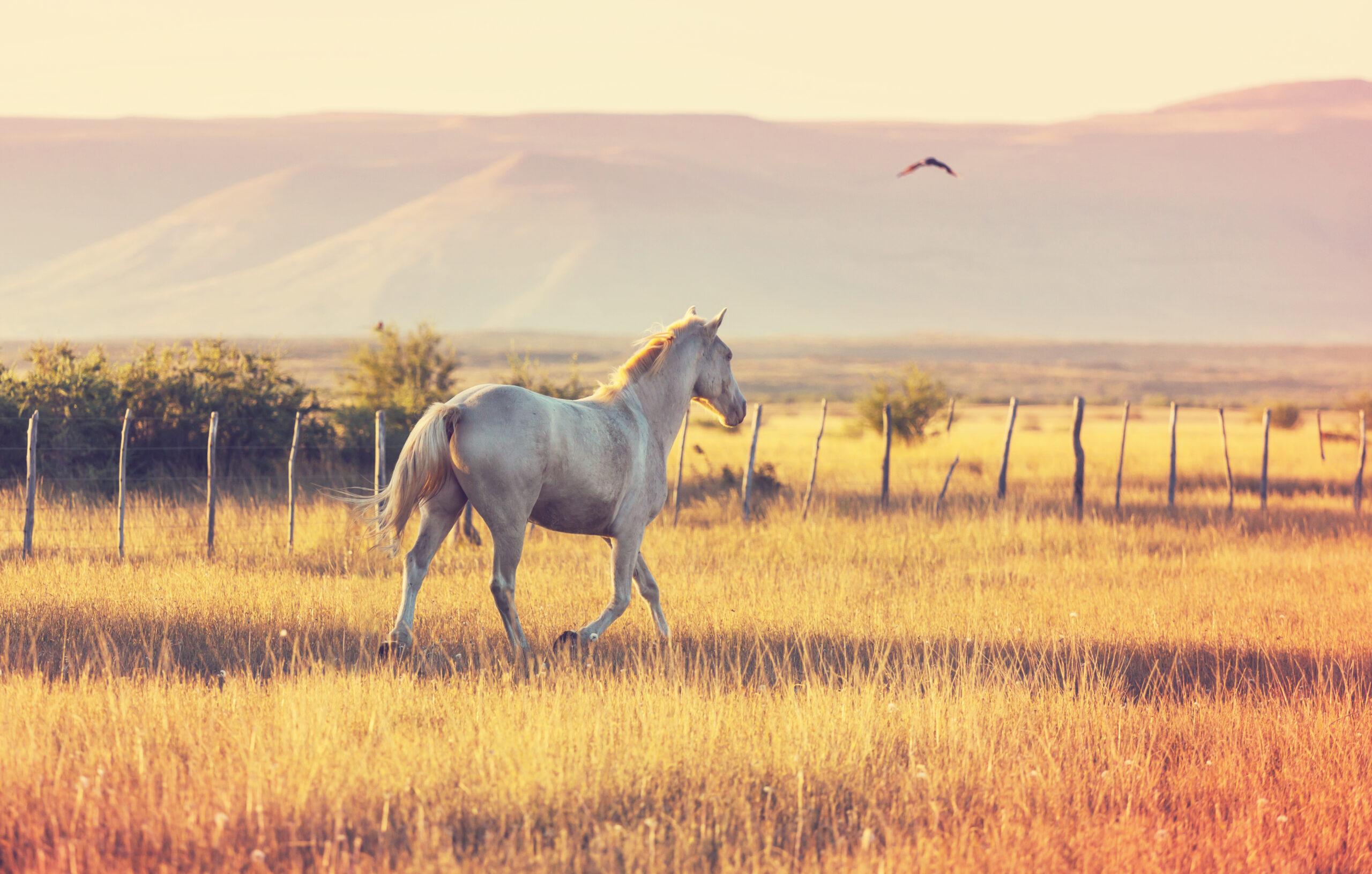 cavalo no campo com pelos brilhando