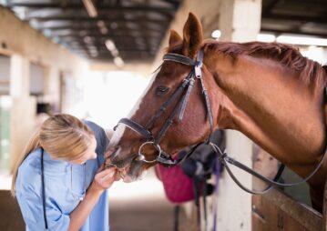 veterinária verificando saúde bucal do cavalo