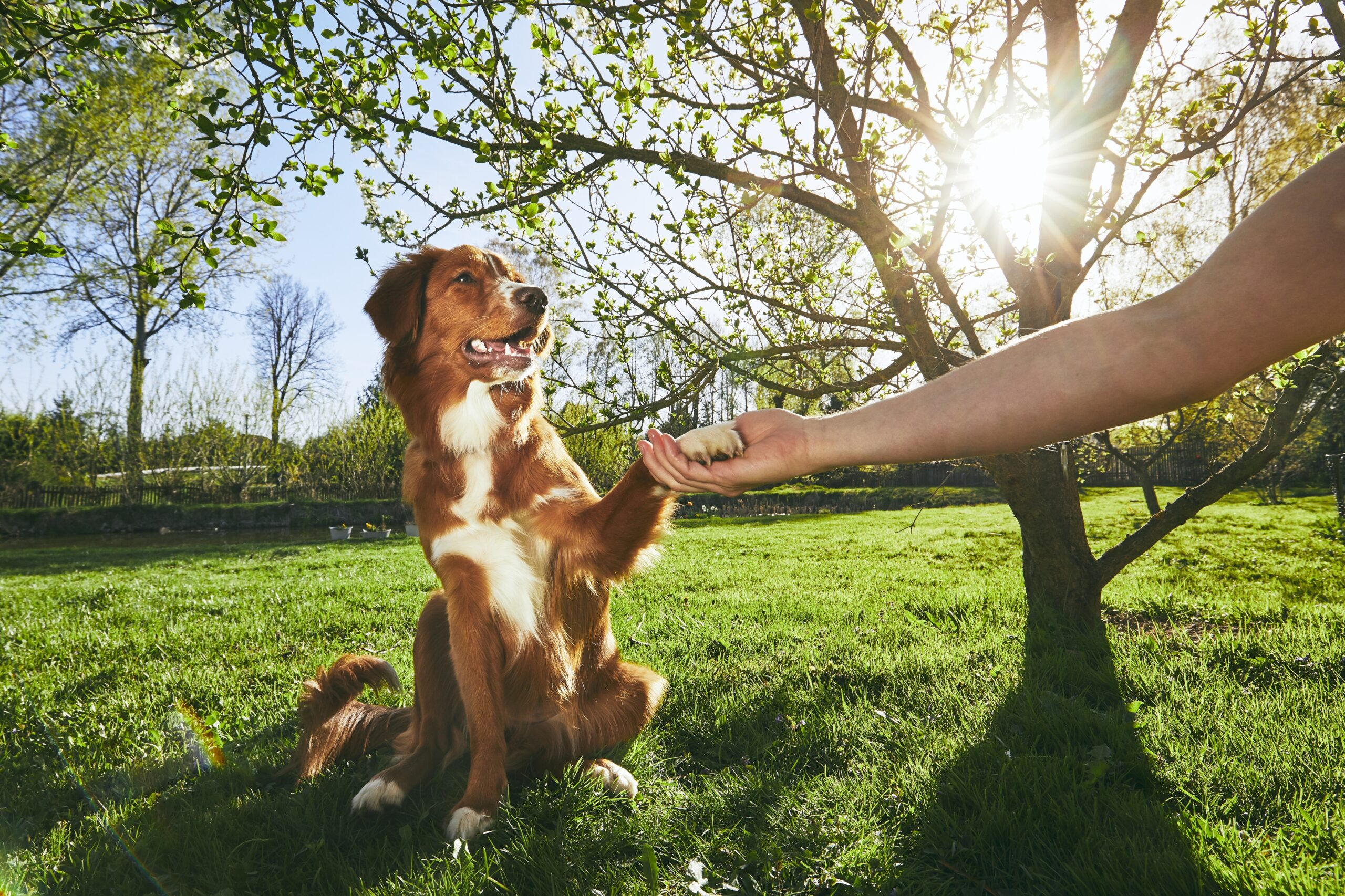 cachorro dando a patinha