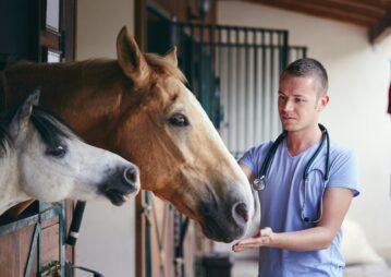 cavalo vacinado contra Influenza