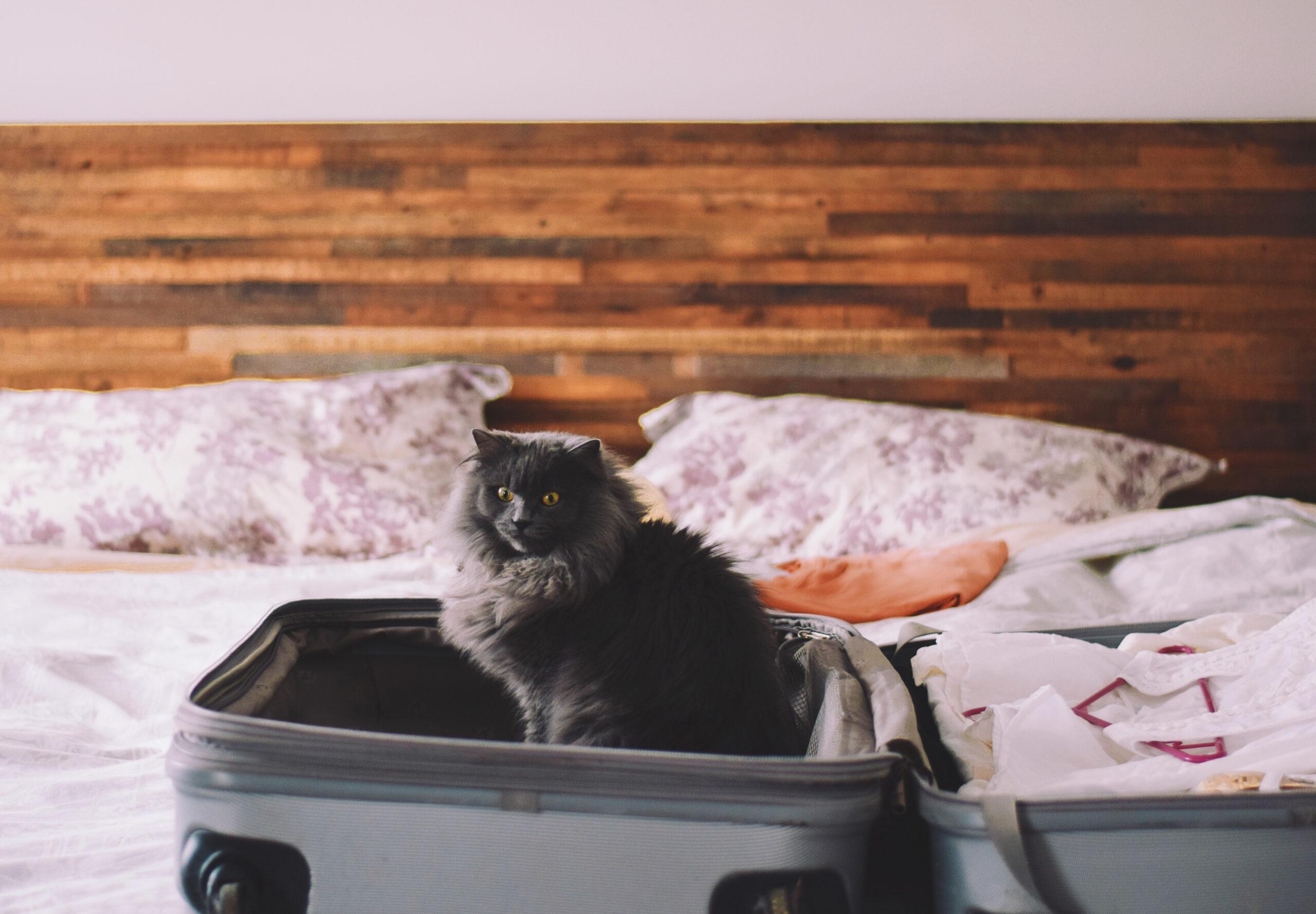 Mudança com gatos: gato preto dentro de uma mala de viagem