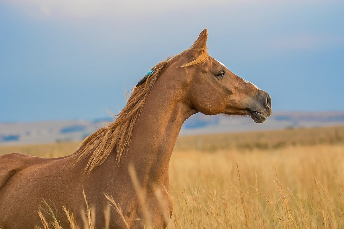 cavalo com estresse