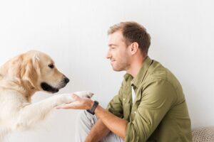 Cachorro golden retriever dando a patinha para o seu dono