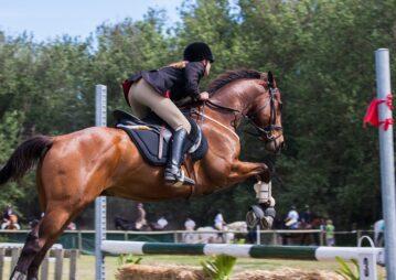 Cavalo Quarto de Milha em competição