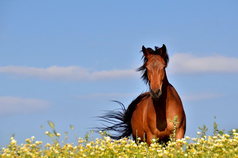 Cavalo correndo em campo com flores