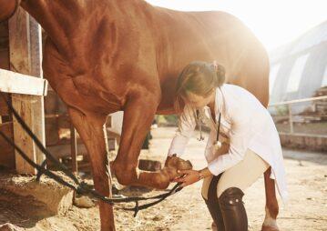 Veterinária cuidando do casco do cavalo
