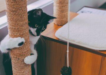 Gato brincando com arranhador. Enriquecimento ambiental