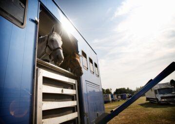 Dois cavalos viajando em trailer